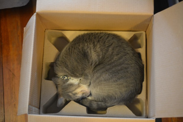 Cat in Fryer Box